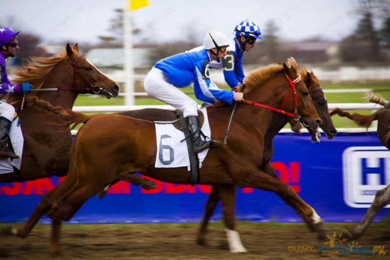 ставки в конном спорте